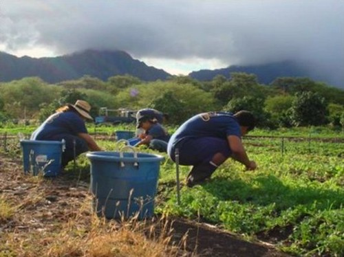 Lualualei community fights to save farmland