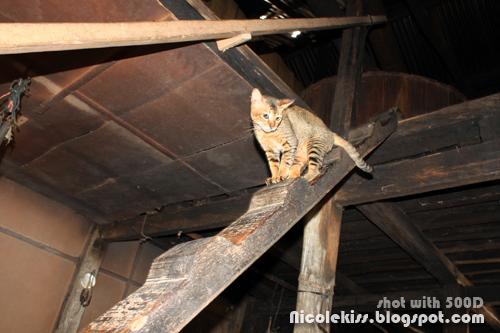 cat climbing down