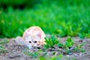 DSC_3158 (nathinou) Tags: green cat weed nikon chat vert 28 nikkor roxanne roux herbe 80200 d300s