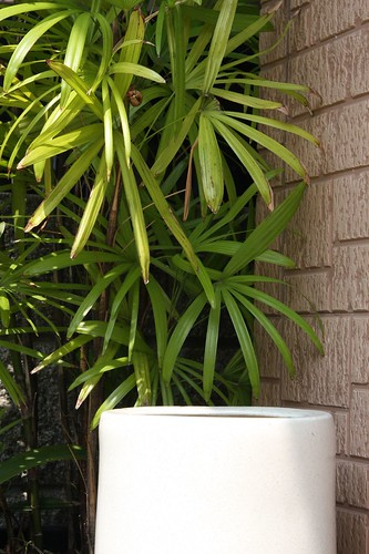 シュロと傘立て A hemp palm and an umbrella stand