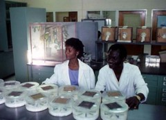 IITA technicians displaying specimens in the l...