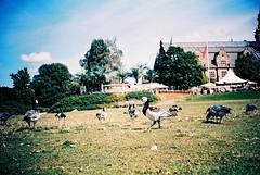 Djurgrden (Matsuo Basho) Tags: bird lca xpro crossprocessed sweden stockholm aves estocolmo suecia agfactprecisa reveladocruzado