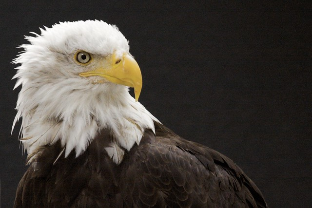 Alaska Images 73