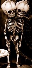 Grotesque (mysunsin) Tags: skeleton gargoyle bones grotesque