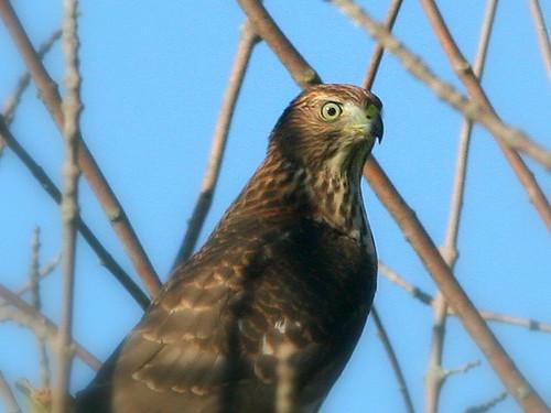 Hawk Eye 20100828