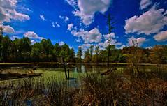 The Gift That Keeps On Giving (T i s d a l e) Tags: field iso200 spring nikon farm swamp wetlands april f22 preserve sanctuary 2010 1100 tisdale 10mm thegift d40 thatkeepsongiving