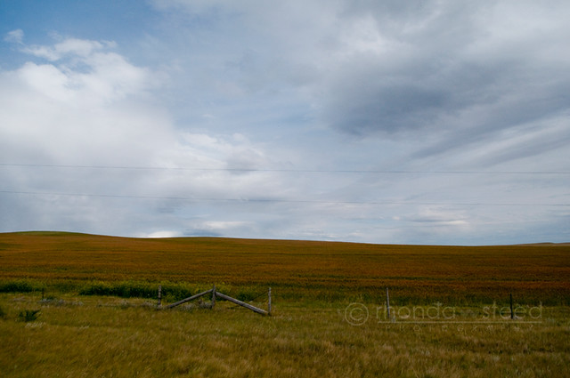 Prairie Fields