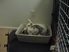 actually, this litterbox IS big enough for the both of us