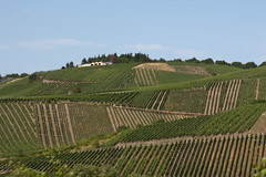 Vineyards, Germany (IMG_2752) (Van der Hoorn) Tags: germany deutschland vineyard duitsland weinberg 2x3 wijngaard canonef50mmf18mki