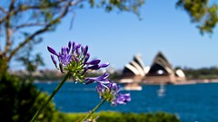 Christmas Holidays 2010 (111 of 134) (Hugh Millear Photography) Tags: house point opera sydney operahouse agapanthus milsons