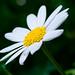 Blumen_20090510__DSC4587-Bearbeitet
