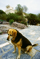 the pensive canine (Xuan Che) Tags: city travel winter dog history film animal architecture europe december capital slide athens scan greece m42 classical fujifilm flektogon 20mm marble acropolis worldheritage 2010 carlzeissjena panathenaic templeofnike velviarvp 2820mm pentelic voigtlanderbessaflex