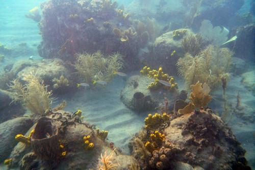 snorkeling scene