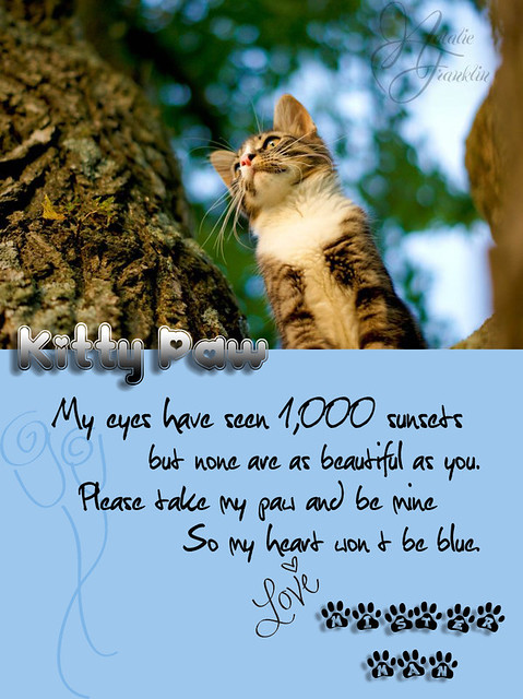 A letter to Kitty Paw
