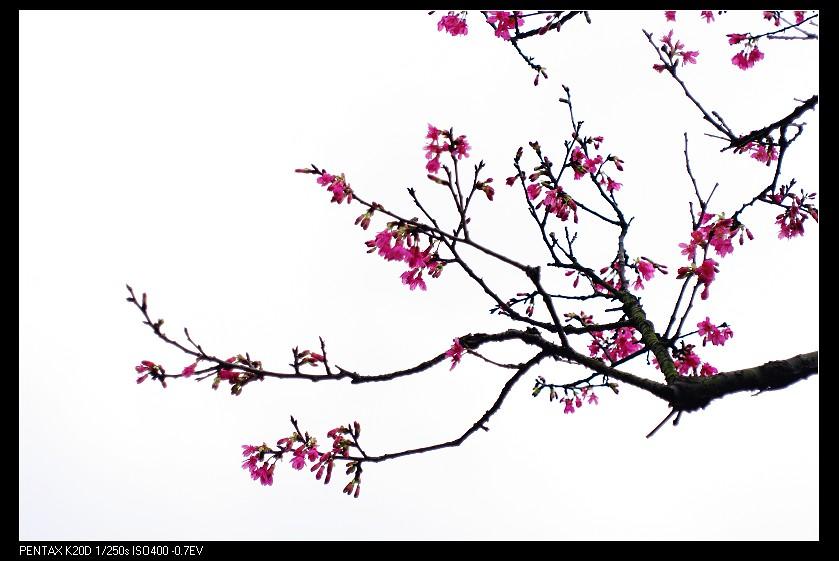 2011/02/12 台北燈節 VOIGTLANDER SKOPAREX 35mm f3.4 DKL!
