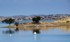 BUCOLIC LAND -(ALQUEVA/ALENTEJO/PORTUGAL) (mjose_almeida) Tags: family tree portugal beautiful river relax landscape happy holidays peace hill calm land lovely tejo alentejo reflexos tagus bucolic reflejos alqueva sobreiro chaparro refetions mjosealmeida