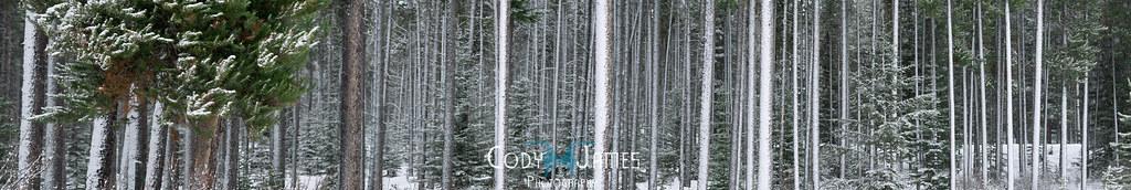 Frost Panorama - Alberta Landscape Photographer - www.codyjames.ca