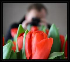 Happy Valentines! (@noutyboy (Instagram)) Tags: flowers flower holland love nature netherlands loving canon europa europe dof nederland natuur valentine gift romantic rood geschenk bloemen liefde nieuwegein cadeau benelux romantisch nout valentijnsdag kadootje 1000d eos1000d mygearandme noutyboy