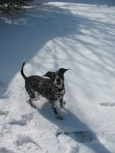 Our big snow day of 2011!