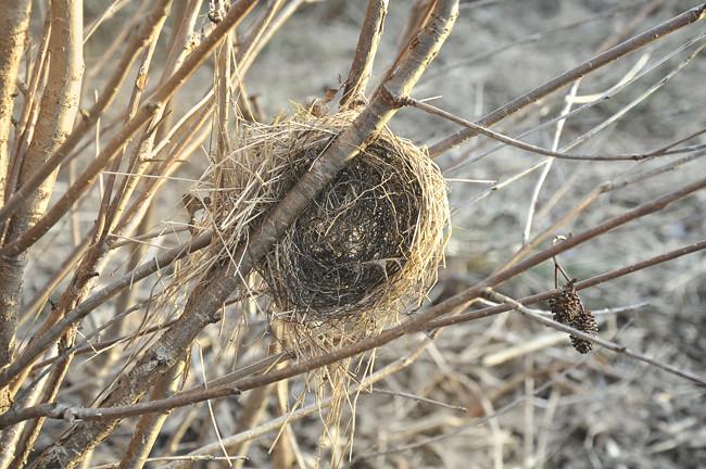 fågelbo på vift