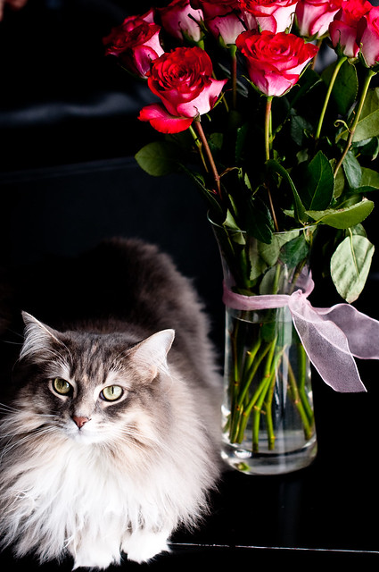 Valentines 018
