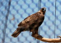 california bird nature animal san diego conservatory vista chula