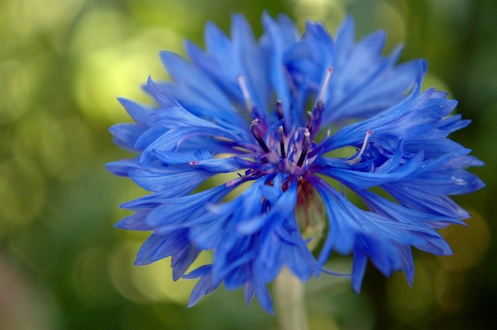 Blue Buddy #1 by Nikon D70