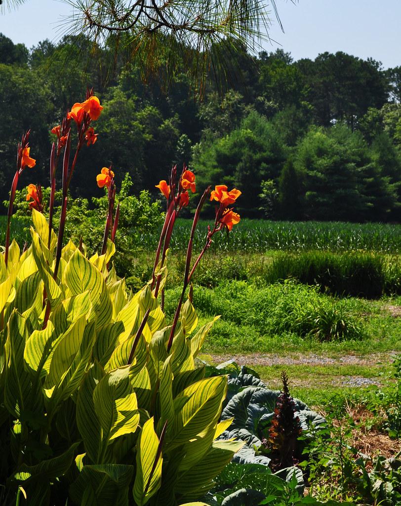 Sterrett Gardens (24)