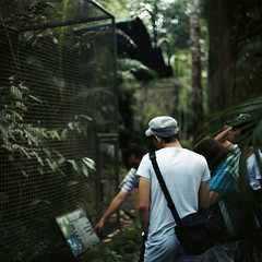 (*YIP*) Tags: family people men 120 6x6 film birds animal animals mediumformat indonesia square wildlife cage males malang adults naturalworld wildanimals kiev60 eastjava jawatimur pasuruan epsonv500 yipchoonhong tamansafariindonesiaiiprigen