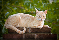 Moix (Juan Antonio Cap) Tags: animal cat kat feline chat gato felino katze mace  gatto  kot gat koka kedi kissa kttur maka kucing pusa mo moix    minino    pisic   canoneos5dmarkii