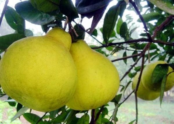 fruitandcharacter8