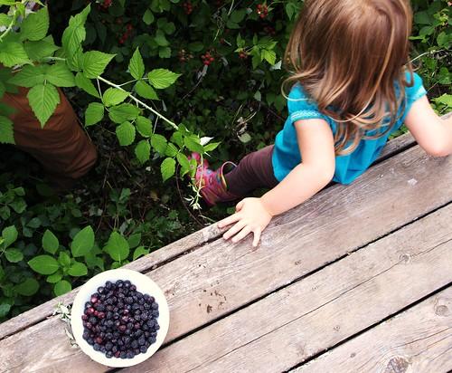 Berries 006