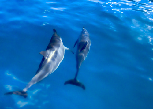 dolphins-4