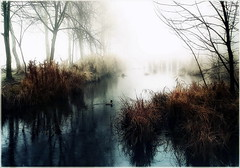 End of Eternity (Cpt<HUN>) Tags: autumn light mist lake reflection tree landscape hungary mood style impression hun mistery dvornik mywinners szdliget szdliget