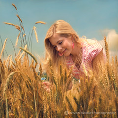 The Cornflower (fesign) Tags: summer woman girl corn cornfield wheat blond transylvania cornflower bluebottle outstandingromanianphotographers