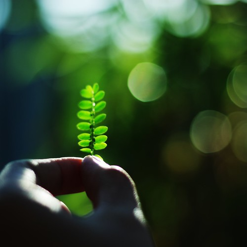 [フリー画像] 花・植物, 植物(その他), ボディーパーツ, グリーン, 手, 201008121300