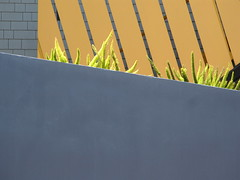 Urban Garden (my.third.eye) Tags: abstract color texture geometric lines yellow paint angles urbannature urbangeometry yellowandgray
