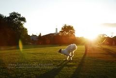 Dog Eclipse