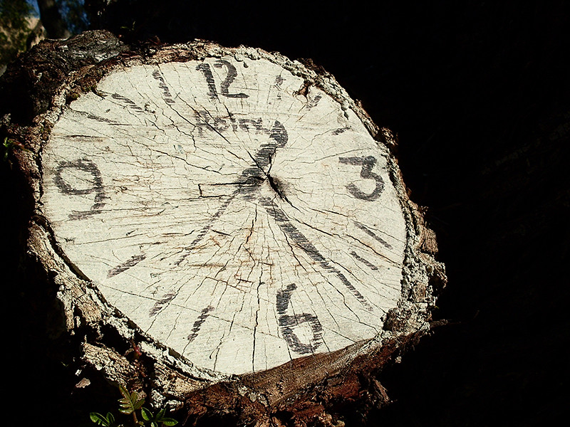 Reloj marcado en un árbol