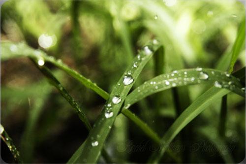 little drop of rain