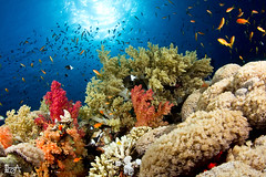 Colorful (Lea's UW Photography) Tags: underwater redsea egypt fins corals unterwasser tiran korallen jacksonreef tokina1017mm canon7d leamoser