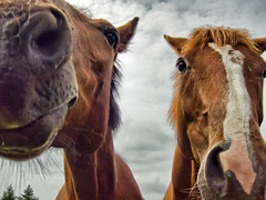 Billy and Zingy (Dan Baillie) Tags: sky horses horse mouth nose funny head wideangle heads billy viewpoint equestrian equine zingy danbaillie bailliephotographycouk bailliephotography wigtownshirephotographer dumfriesandgallowayphotography