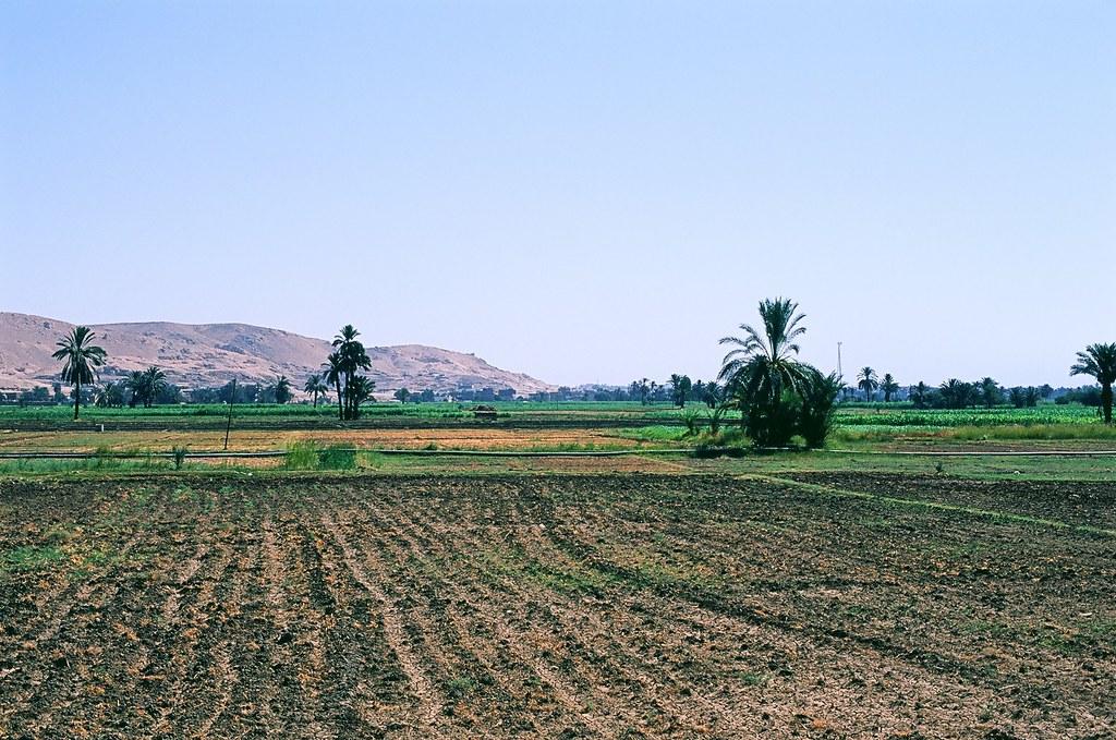 Egypt D4-0132