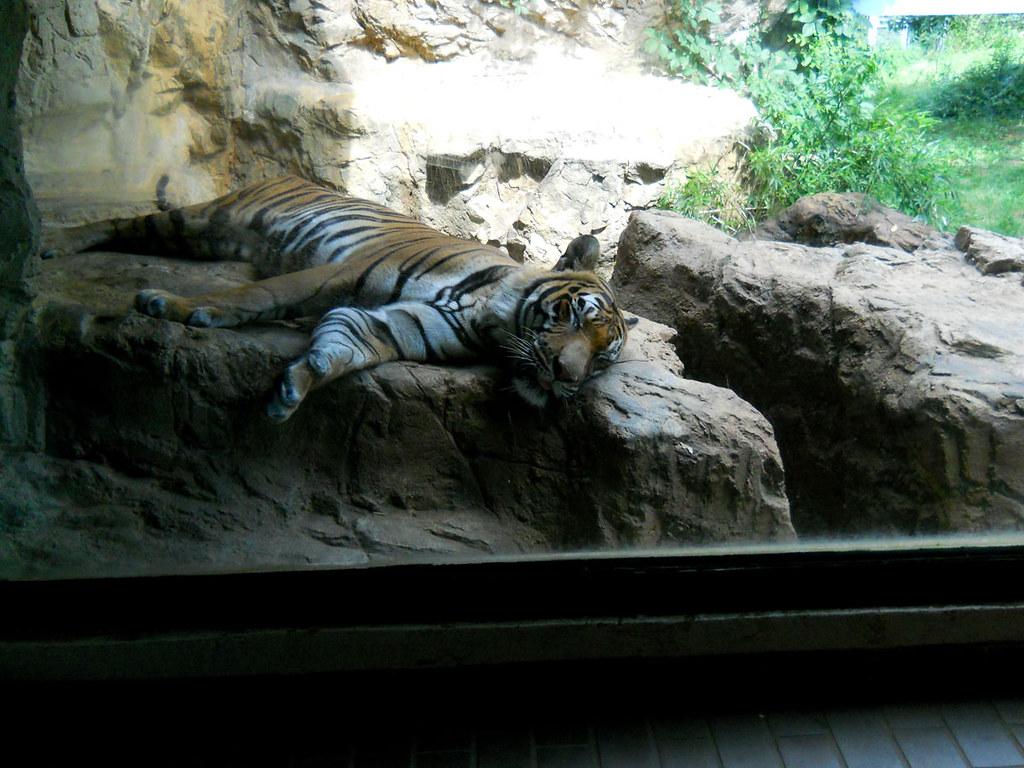 Zoo2010_021