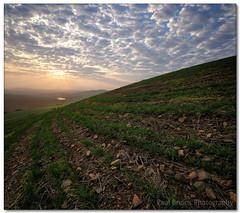 Durbanville Hills Seedling Sunset (Panorama Paul) Tags: sunset soe durbanvillehills nohdr sigmalenses nikfilters vertorama nikond300 wwwpaulbruinscoza paulbruinsphotography wheatseedlings
