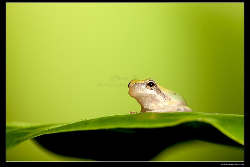 深深夜,青蛙拍