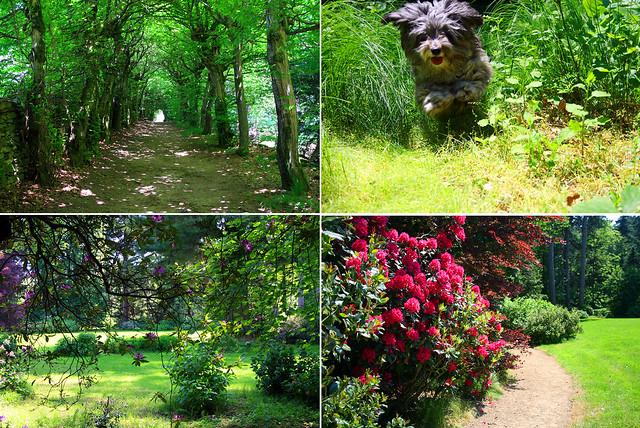 Fioritura rododendri e azalee nel parco giardino di Bagnolo Piemonte