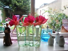 Fuchsia flowers in an Aalto vase