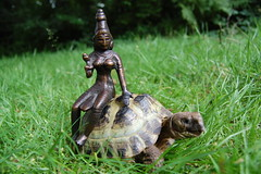 Lakshmi (TREASURES OF WISDOM) Tags: art statue bronze asian temple shrine god lakshmi tortoise collection ritual om hindu orbs deity votive asianart hunduism lordhenry indianbronze