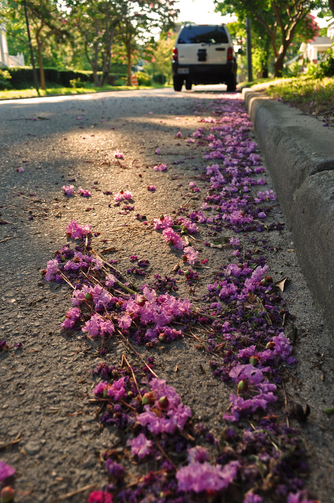 Lavender in the Gutter